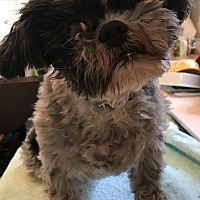 Adopt A Pet :: Kasia - Lincolnwood, IL