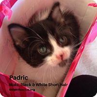 Adopt A Pet :: Padric - Temecula, CA