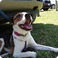 Adopt A Pet :: Mimi - Dallas, TX