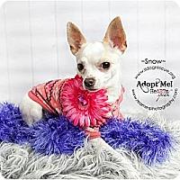 Adopt A Pet :: Snow - Shawnee Mission, KS