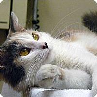 Adopt A Pet :: Leilani - Chicago, IL