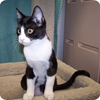 Adopt A Pet :: K-Vogl2-Natalie - Colorado Springs, CO