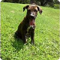 Adopt A Pet :: Hitch - Brewster, NY