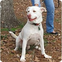 Adopt A Pet :: Dennis - Kingwood, TX