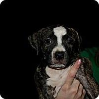 Adopt A Pet :: Chester - Mesa, AZ