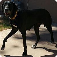 Adopt A Pet :: Rayne - Phoenix, AZ