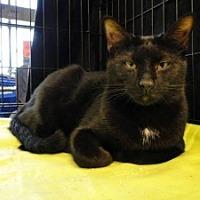 Adopt A Pet :: Bobby - Brooksville, FL