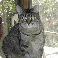 Adopt A Pet :: Penny - Naples, FL