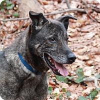 Adopt A Pet :: Anakin - Port Washington, NY