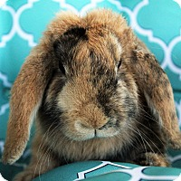 Adopt A Pet :: Venus - Hillside, NJ