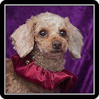 Adopt A Pet :: Maya - San Diego, CA