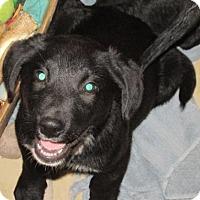 Adopt A Pet :: Onyx - Rocky Mount, NC