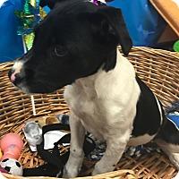 Adopt A Pet :: Polo - Decatur, AL