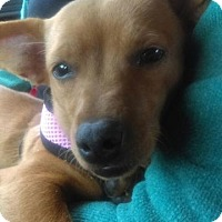 Adopt A Pet :: Auburn - Hanover, PA