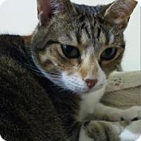 Adopt A Pet :: Juana - Bulverde, TX