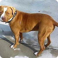 Adopt A Pet :: Brody - Burgaw, NC