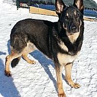 Adopt A Pet :: Aries - Rigaud, QC
