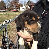 Adopt A Pet :: Mack - Russellville, AR