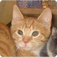 Adopt A Pet :: Devlin - Jenkintown, PA