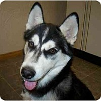 Adopt A Pet :: Diamond - Belleville, MI