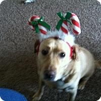 Adopt A Pet :: Molly - Oak Creek, WI