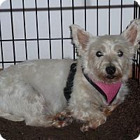 Adopt A Pet :: Gemma-pending adoption - Omaha, NE