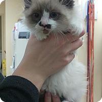 Adopt A Pet :: Tallah - Edmonton, AB