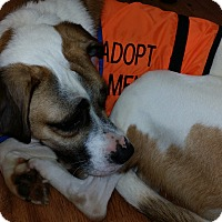 Adopt A Pet :: Clark - Mechanicsburg, PA