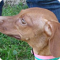 Adopt A Pet :: Lucy - Erwin, TN