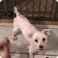 Adopt A Pet :: Bruce - Brooksville, FL