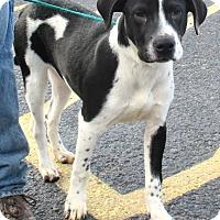 Adopt A Pet :: Leo - Reeds Spring, MO