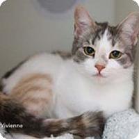 Adopt A Pet :: Vivienne - Merrifield, VA