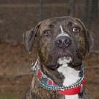 Adopt A Pet :: Rudi - Chattanooga, TN