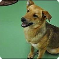 Adopt A Pet :: Abby - Washington, NC
