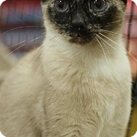 Adopt A Pet :: Sky - Sacramento, CA