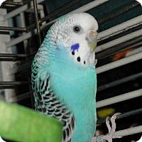 Adopt A Pet :: Hope - Neenah, WI
