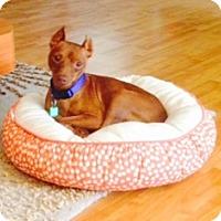 Adopt A Pet :: Luke - Sacramento, CA