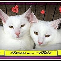 Adopt A Pet :: Chloe: fostered - Rustburg, VA