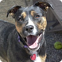Adopt A Pet :: Liddy - Meridian, ID