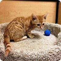 Adopt A Pet :: Samurai - Riverside, CA