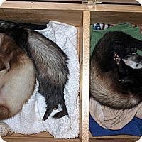 Adopt A Pet :: Gizmo, Yogi, Alba - Acworth, GA
