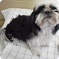 Adopt A Pet :: Ria - Wickenburg, AZ