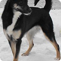 Adopt A Pet :: Nova - Rigaud, QC