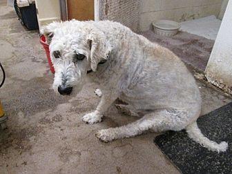Spaniel (Unknown Type) Mix Dog for adoption in Dodge City, Kansas - Annie
