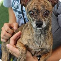 Adopt A Pet :: Petey - Woodland, CA