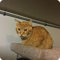 Adopt A Pet :: Gingie - Medford, NY