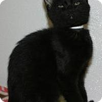 Adopt A Pet :: Dante 2 - Venice, FL