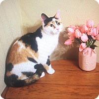 Domestic Shorthair Cat for adoption in Atlantic, North Carolina - Wonder