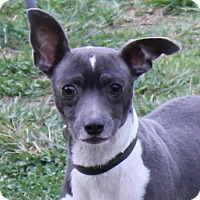 Adopt A Pet :: Thora - Colonial Heights, VA