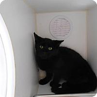 Adopt A Pet :: Savannah - THORNHILL, ON